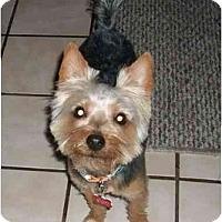 Adopt A Pet :: Huey - Gulfport, FL