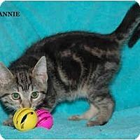 Adopt A Pet :: Annie - Catasauqua, PA
