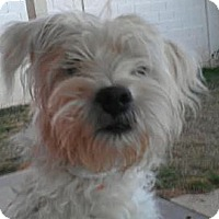 Adopt A Pet :: Ritchie - Phoenix, AZ