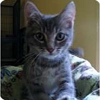 Adopt A Pet :: Chortle - Shelton, WA