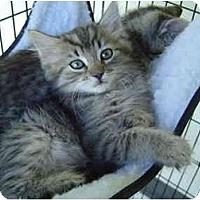 Adopt A Pet :: Bilbo - Modesto, CA