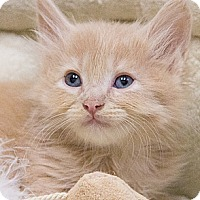 Adopt A Pet :: McCrory - Chicago, IL