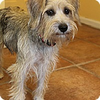 Adopt A Pet :: Scrabble - Bedminster, NJ