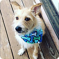Adopt A Pet :: Roscoe - Acushnet, MA