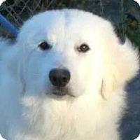 Adopt A Pet :: Riley (Yeti) - Orlando, FL
