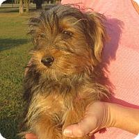 Adopt A Pet :: Edward - Westport, CT