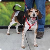 Adopt A Pet :: EMALIE - Albany, NY