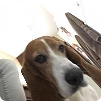 Adopt A Pet :: Ava - Grapevine, TX