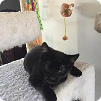 Adopt A Pet :: Pickles - Morgan Hill, CA