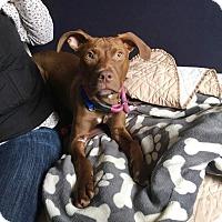 Adopt A Pet :: Mocha - Elyria, OH