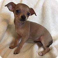 Adopt A Pet :: Cookie - Alabaster, AL
