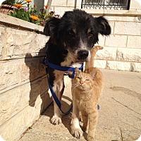 Adopt A Pet :: Zahara - Ocean Ridge, FL