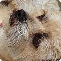 Adopt A Pet :: Rugby - Phoenix, AZ