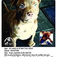 Adopt A Pet :: Tesla - Ortonville, MI