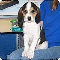Adopt A Pet :: Daisy - Minneola, FL