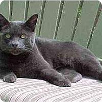 Adopt A Pet :: Baxter (He's Good Luck!) - Portland, OR
