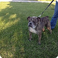 Adopt A Pet :: CINDER - Scottsburg, IN