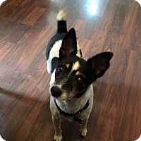 Adopt A Pet :: Tippy - Aurora, IL