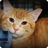 Adopt A Pet :: James - Springfield, PA