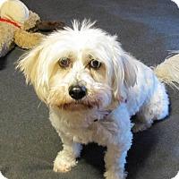 Adopt A Pet :: BAILEY - Eden Prairie, MN