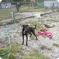 Adopt A Pet :: Rubin 0485 - Jacksonville, FL