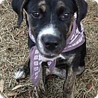 Adopt A Pet :: Winnie - Davie, FL