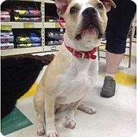 Adopt A Pet :: River - Grand Rapids, MI