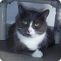 Adopt A Pet :: Hazel Ann - Hamburg, NY