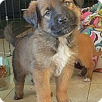 Adopt A Pet :: BEETHOVEN AND BONNIE - Winnetka, CA
