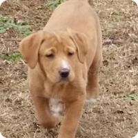 Adopt A Pet :: Bo - Rocky Mount, NC