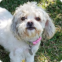 Adopt A Pet :: BAILEY - San Dimas, CA