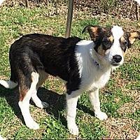 Adopt A Pet :: Sidney - Oswego, IL