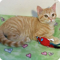 Adopt A Pet :: Milton - Glendale, AZ