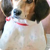 Adopt A Pet :: Josie II - Tampa, FL