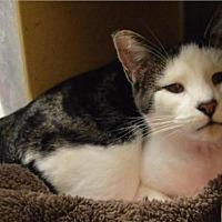 Adopt A Pet :: Georgio - Logan, UT