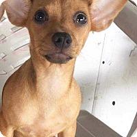 Adopt A Pet :: Bunny - Allen, TX