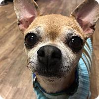 Adopt A Pet :: Gloria - Milwaukee, WI