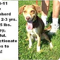 Adopt A Pet :: # 471-11 @ Animal Shelter - Zanesville, OH