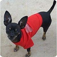 Adopt A Pet :: Pinky - San Angelo, TX
