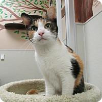 Adopt A Pet :: Big Nose Kate - Gilbert, AZ