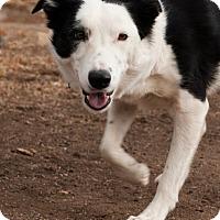 Adopt A Pet :: Widgit - Courtesy Listing - Monrovia, CA