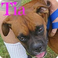 Adopt A Pet :: Tia - Scottsdale, AZ
