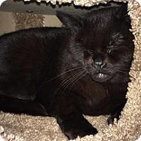 Adopt A Pet :: Georgia - Brampton, ON