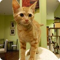 Adopt A Pet :: Ajax - The Colony, TX