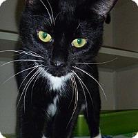 Adopt A Pet :: Jersey - Hamburg, NY