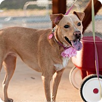 Basenji Mix Dog for adoption in Tempe, Arizona - Lana