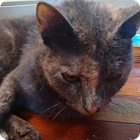 Adopt A Pet :: Annika - Morganton, NC