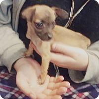 Adopt A Pet :: Yoda - Victorville, CA