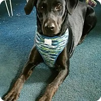 Adopt A Pet :: Peepers - Akron, OH