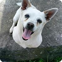Adopt A Pet :: Bliss - Blacksburg, SC